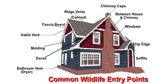 Common Wildlife Entry Points in Michigan