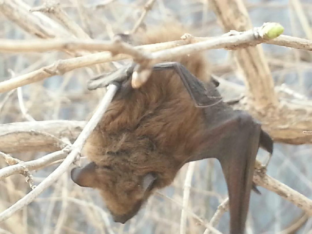 Michigan Bat Removal in Spring