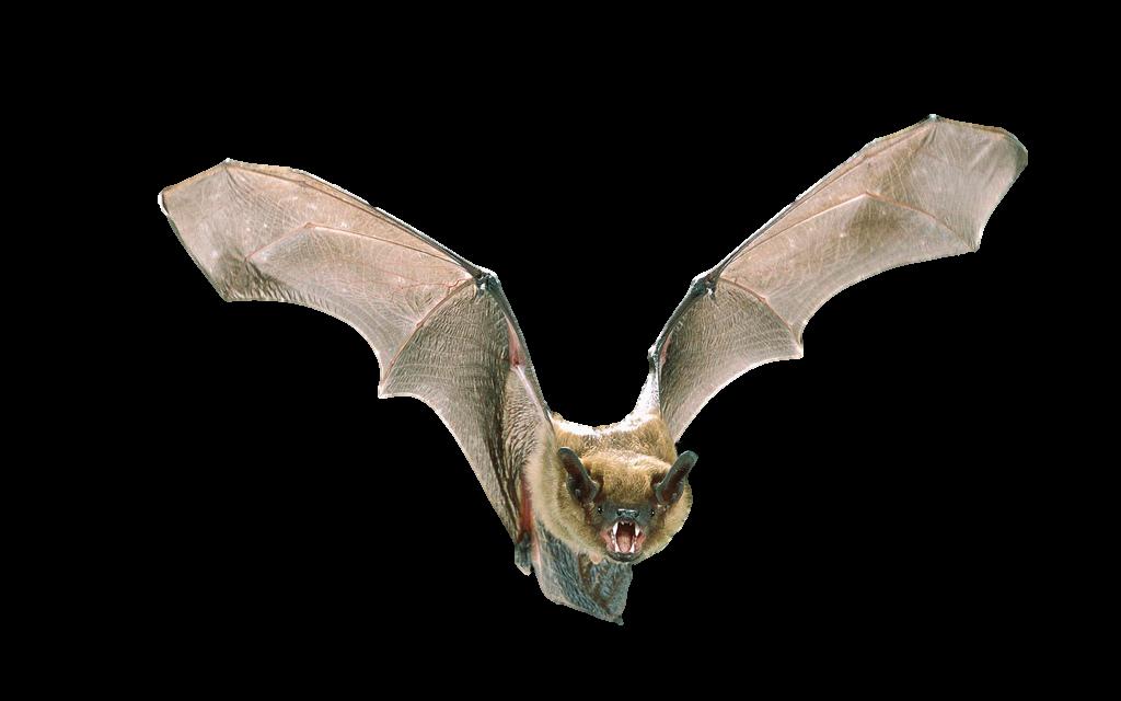 Michigan Bat Control