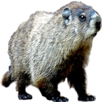 Michigan Groundhog Removal Company