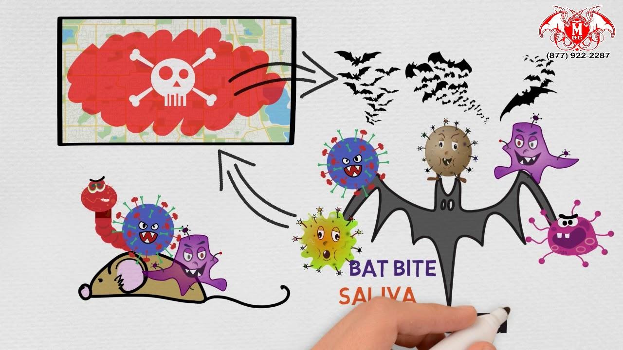 🦇 Bat Removal Services Near Me   Michigan Bat Control