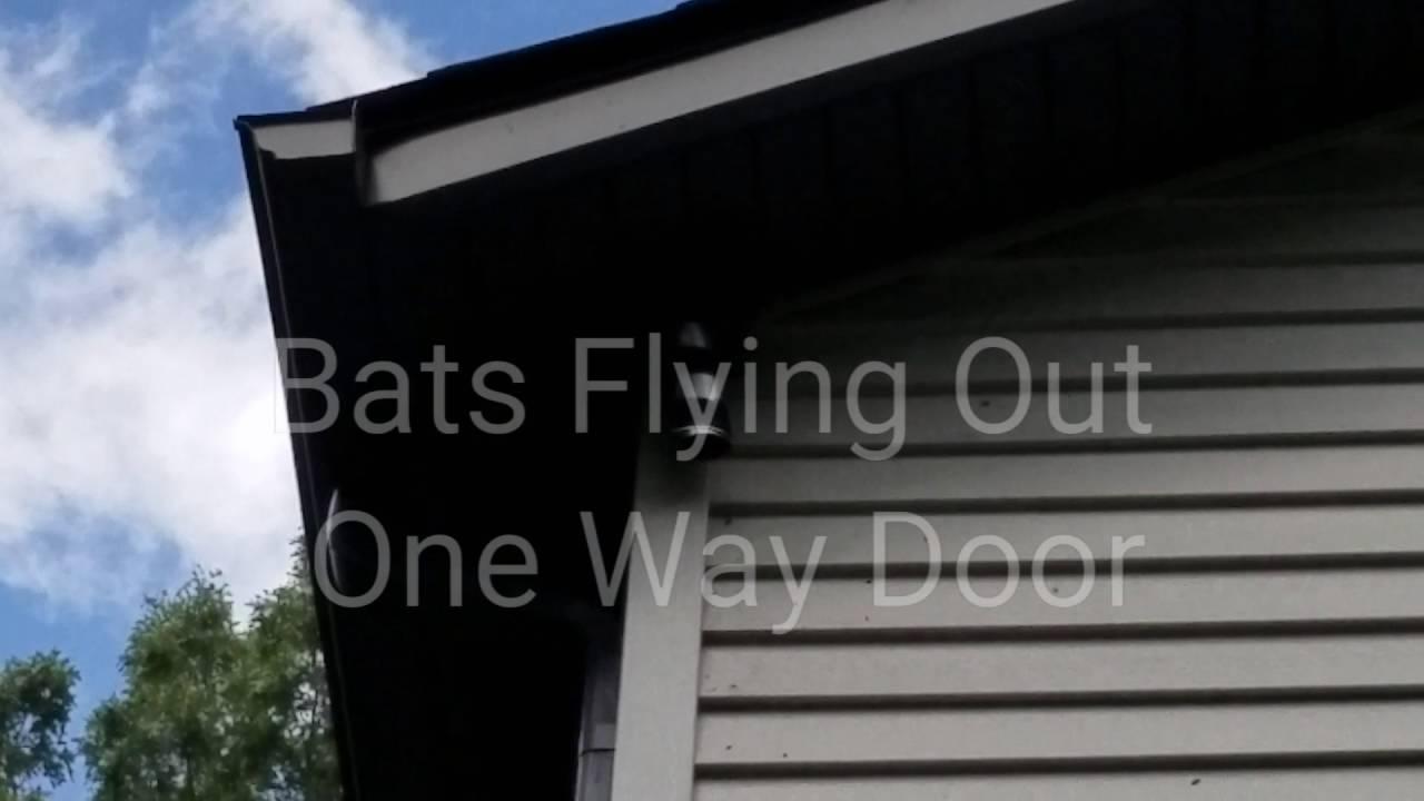 Michigan Bat Control   Using a One Way Bat Door on blinds door, privacy door, welcome door, driver door,