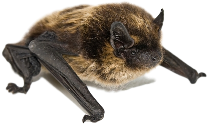 Michigan Bat Exclusion Company