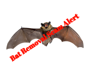 Bat Removal Scam Companies